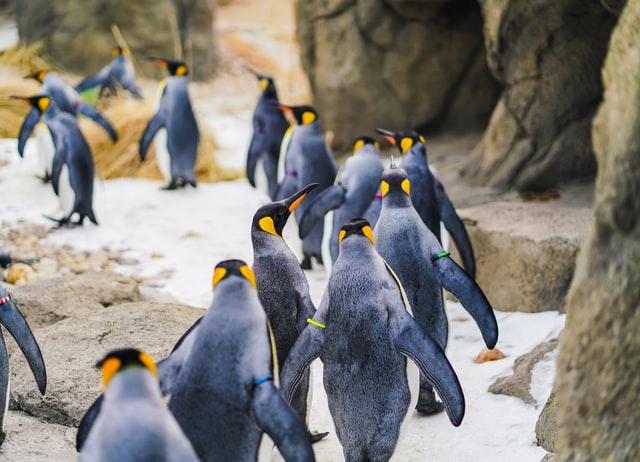 pingviinit_yomex-owo-unsplash